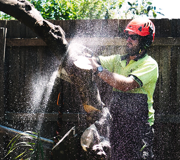 Tree Pruning, removal and Tree Trimming Service i