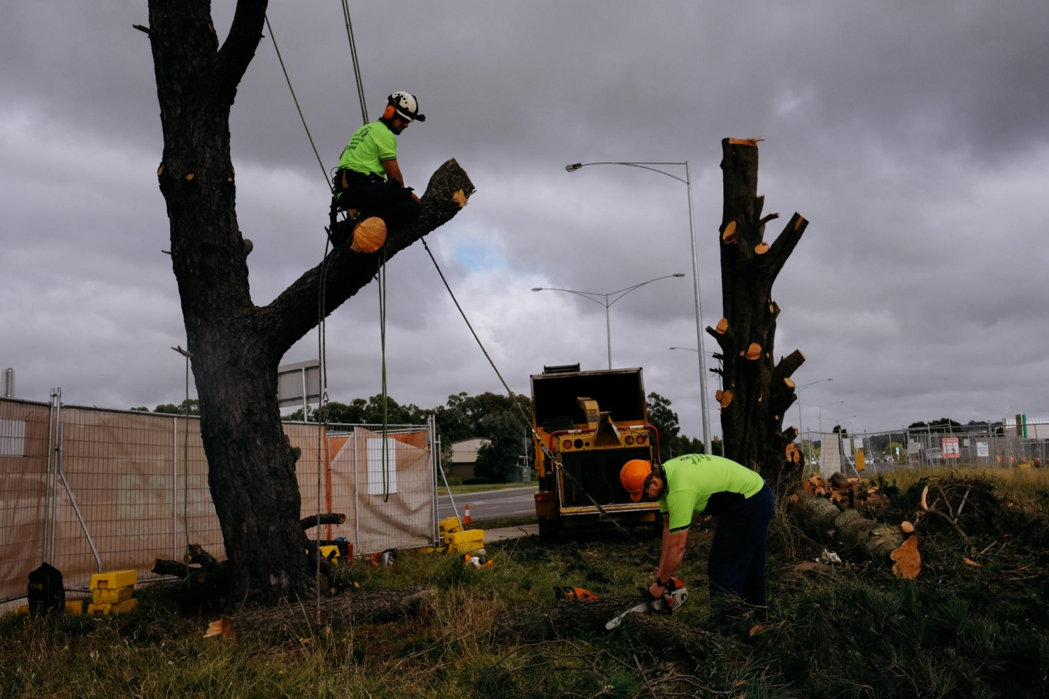 Two tree surgeons cutting down a tree