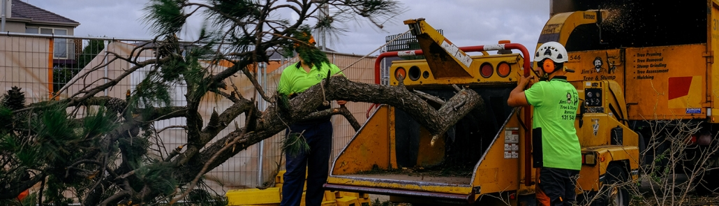 tree removal in Melbourne