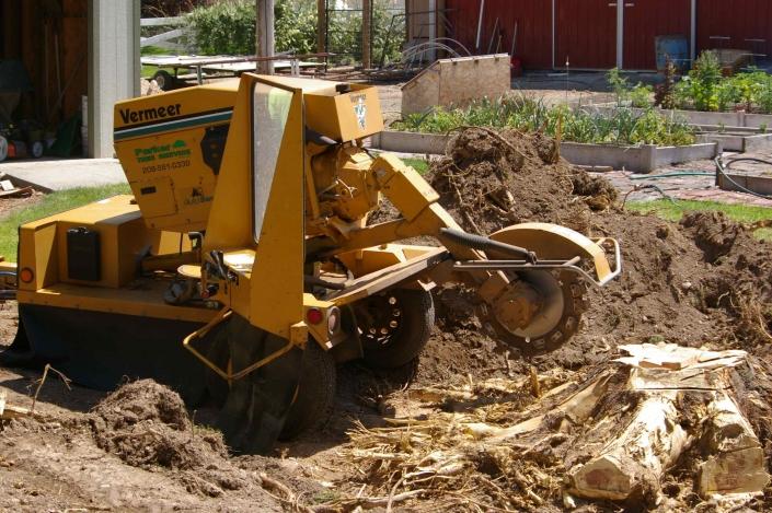 tree stump extraction
