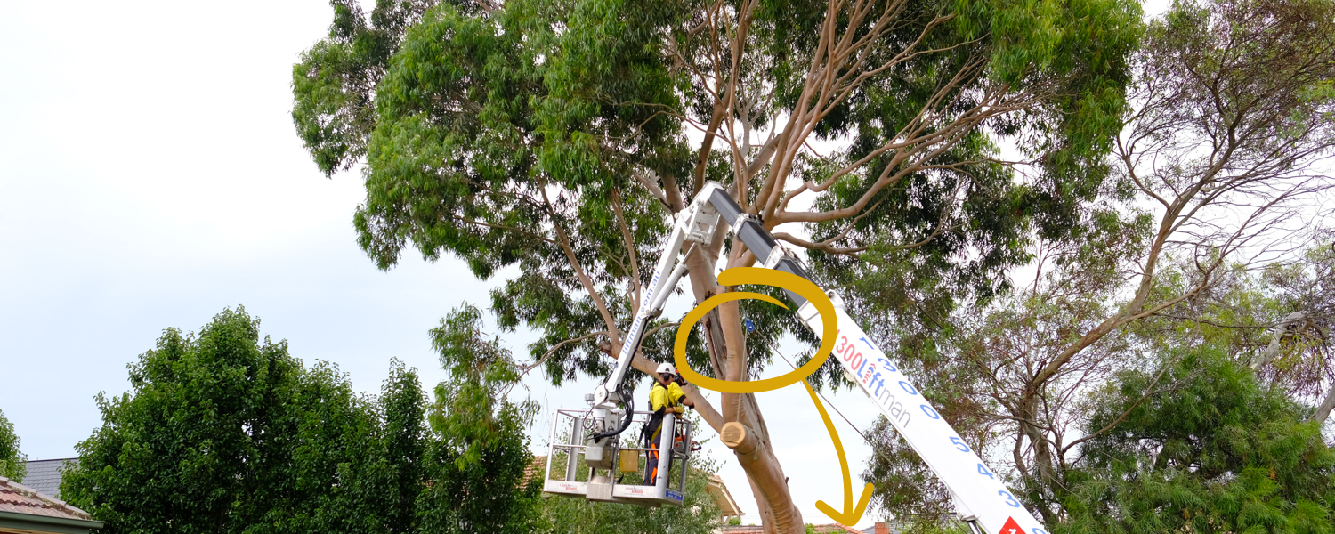 Tree Pruning Cost & Pricing in 2020 | Jim's Trees